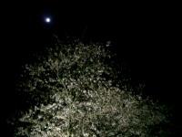 月の光の下で。